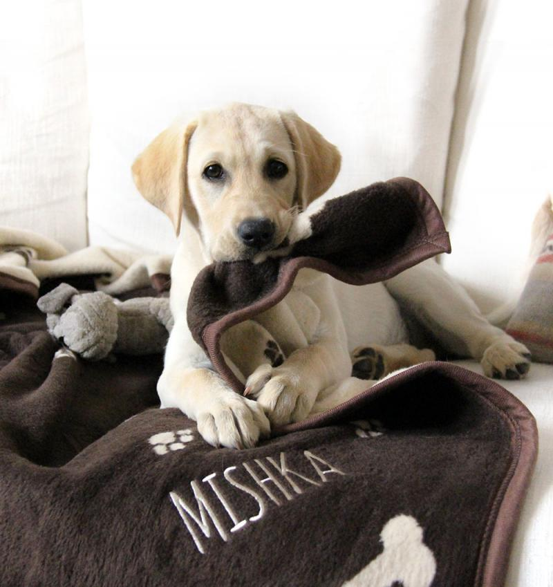Wedding Gifts For Dog Lovers: Personalised Dog Blanket