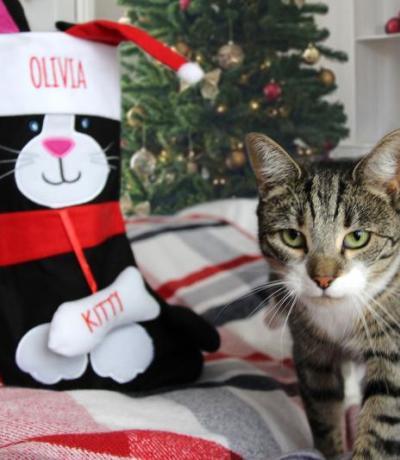 personalised cat stocking