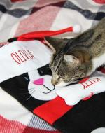 christmas stockings for cats