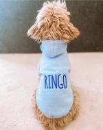 Blue Dog Hoodie