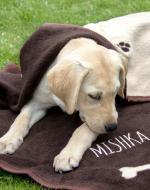 personalised dog blanket uk