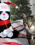 personalised cat stocking
